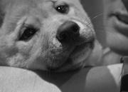 19th Feb 2021 - FoR Dingo