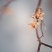 cherry blossom-ish
