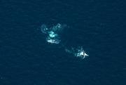 1st Mar 2021 - whales breaching