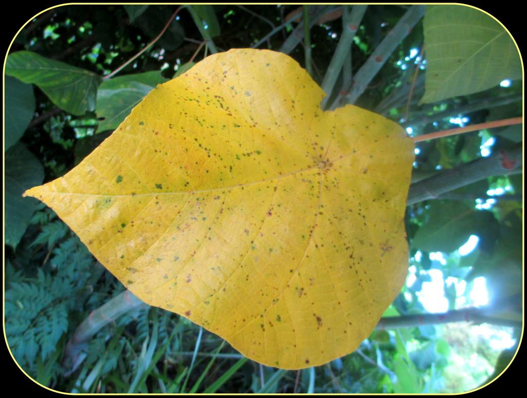 Yellow leaf by 777margo