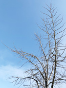 28th Feb 2021 - Blue sky for you…