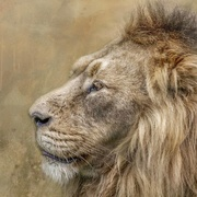 1st Mar 2021 - King of the Jungle