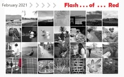 1st Mar 2021 - FLASH of red!