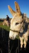 28th Feb 2021 - first donkey walk of the year