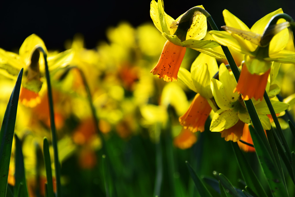 spring time - 2 by ianmetcalfe