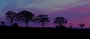 1st Mar 2021 - 0103 Purple Sky