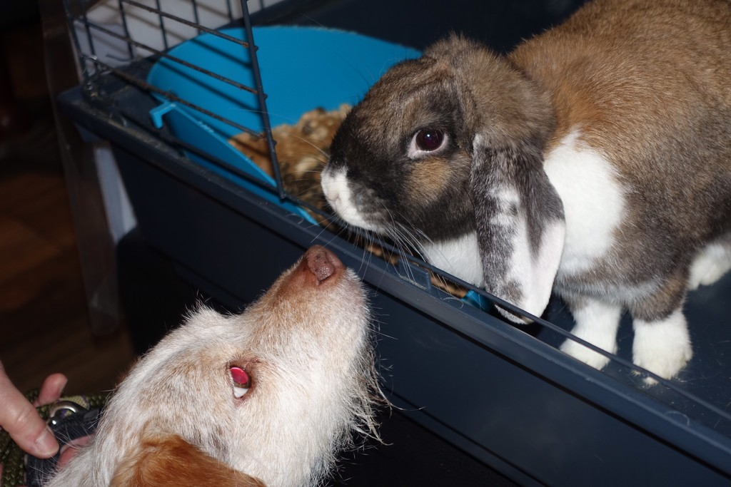 Lily & Floppy Eared Rabbit by s4sayer