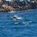Schouten Island Cruise (14)