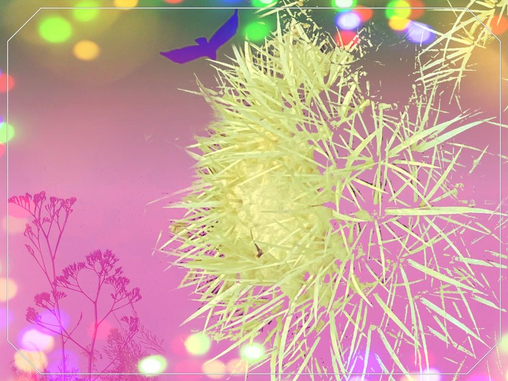 Bokeh cactus  by kathyboyles