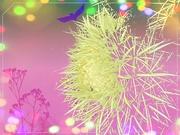 1st Mar 2021 - Bokeh cactus