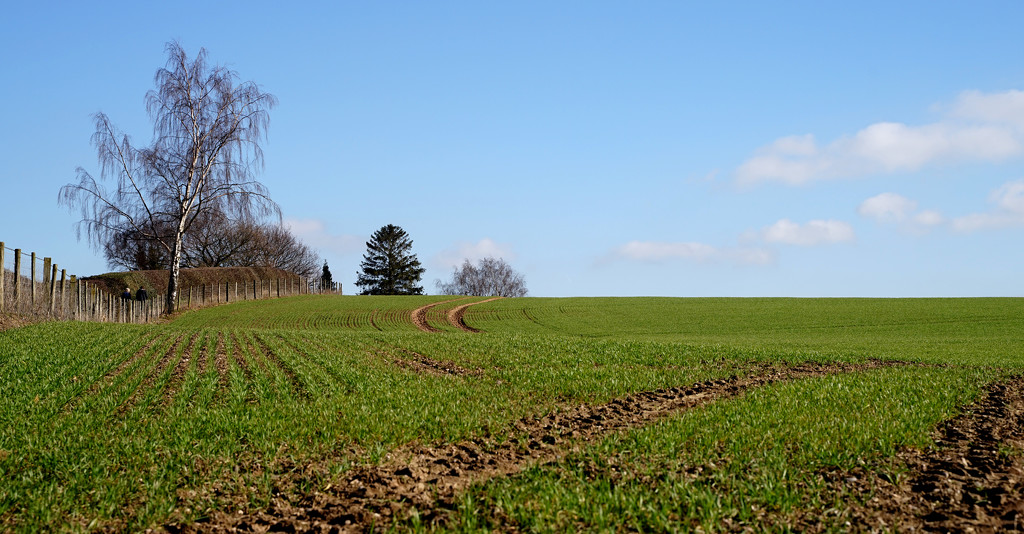 More Redhill Fields by phil_howcroft