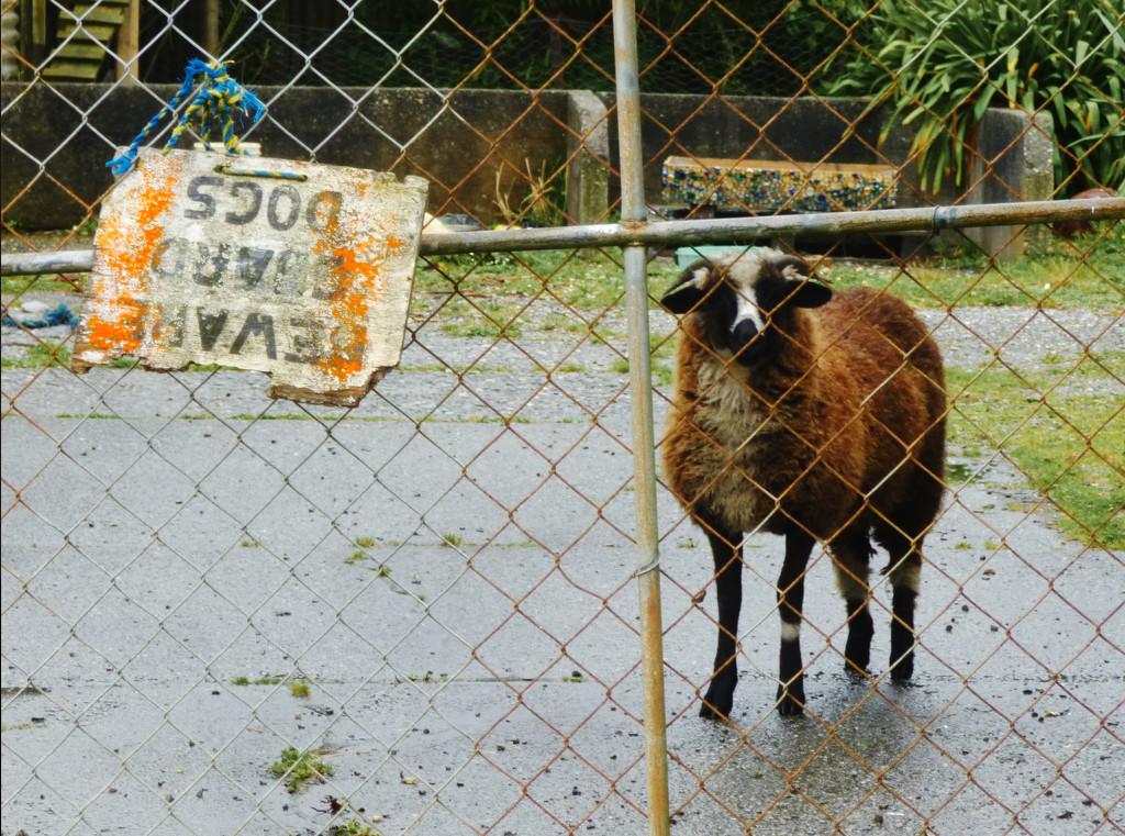 Beware! Guard...Sheep! by kali66