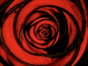 1st Mar 2021 - A Red Rose