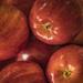 AppleDay-6385