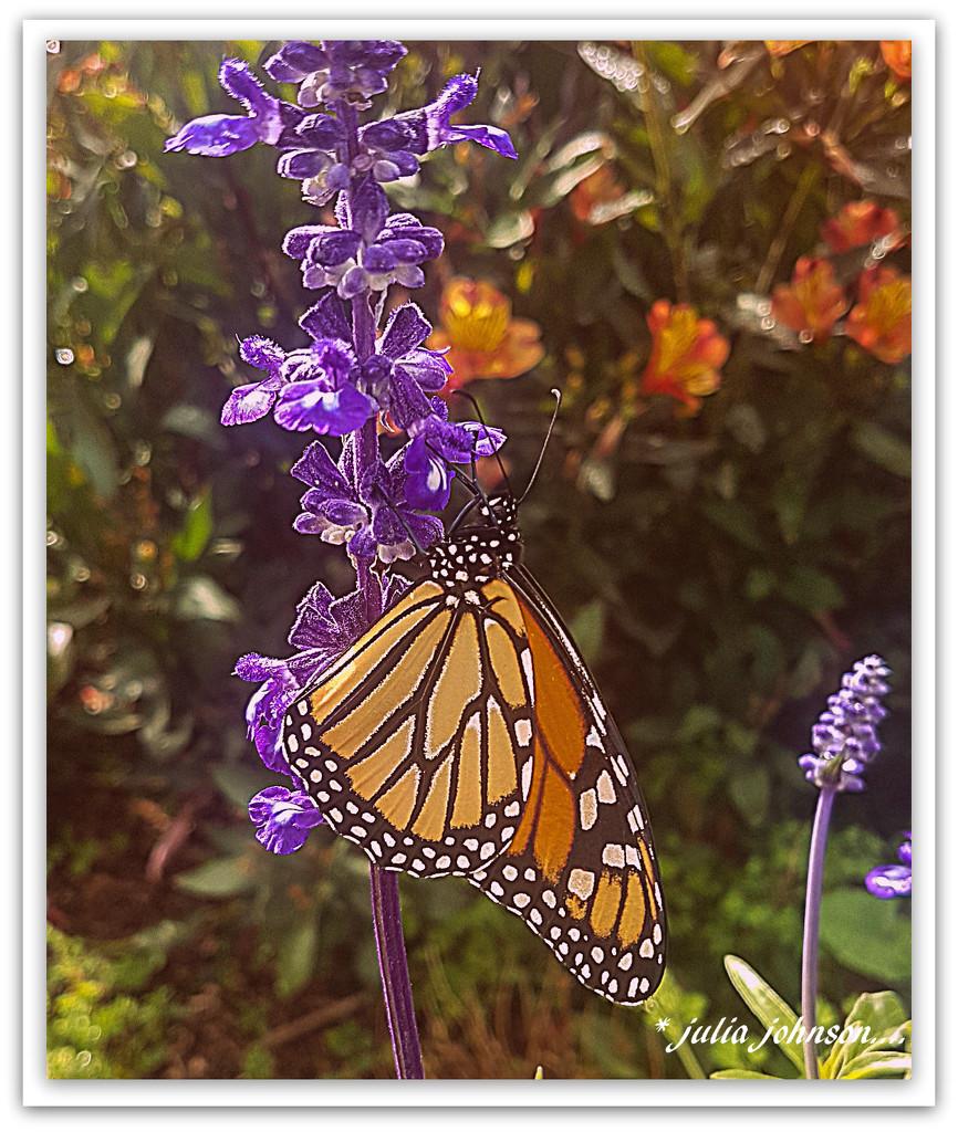 Monarch of the Garden... by julzmaioro