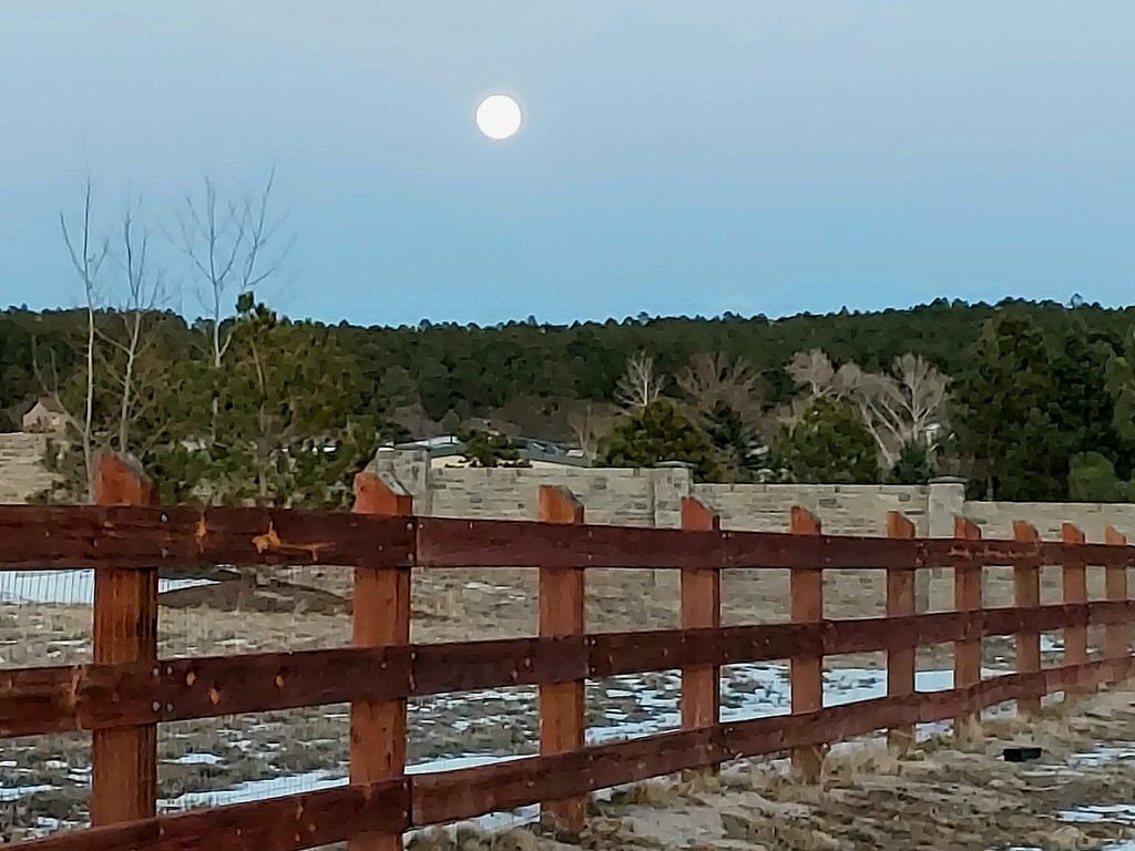 Rising Moon by harbie