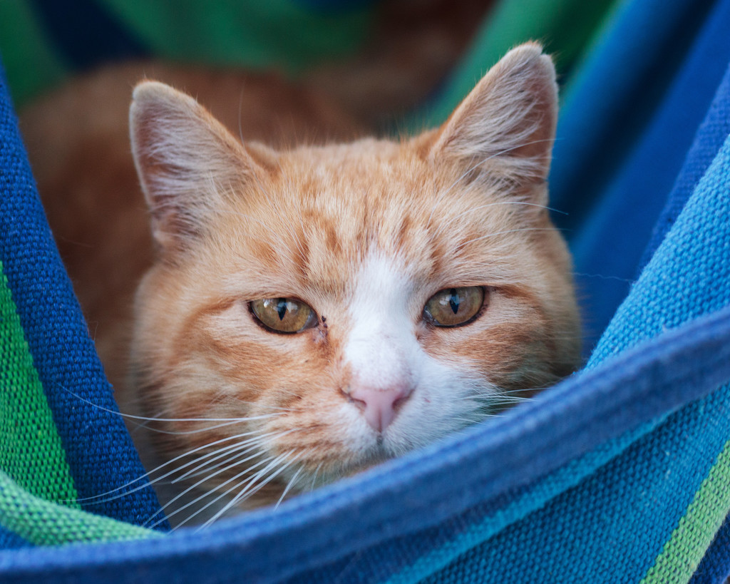 hiding in the hammock by aecasey