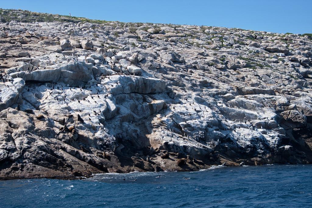 Schouten Island Cruise (23) by kgolab