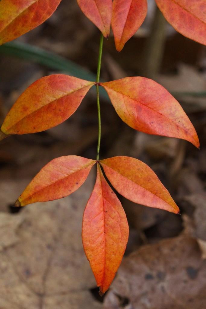 LHG_5571- orange week1 by rontu