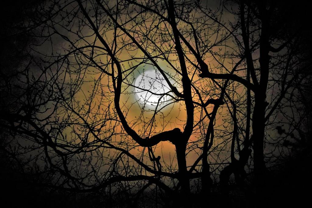 Snow Moon by lynnz