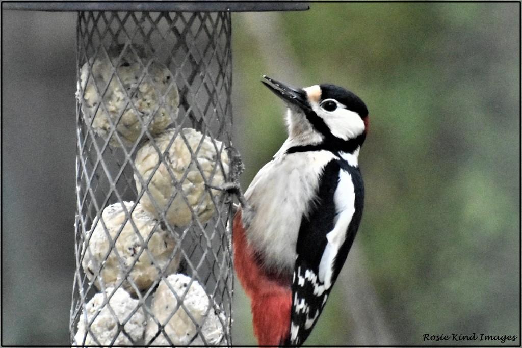 Woody Woodpecker by rosiekind