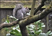 2nd Mar 2021 - What's Squizzer up to?