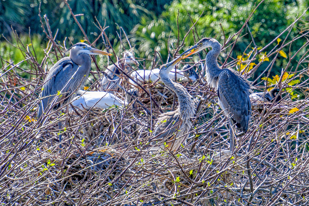 Family life in the nest by danette
