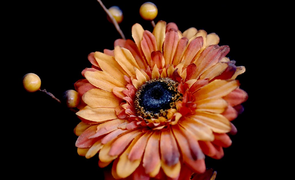 Orange Flower by carole_sandford