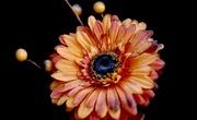 2nd Mar 2021 - Orange Flower