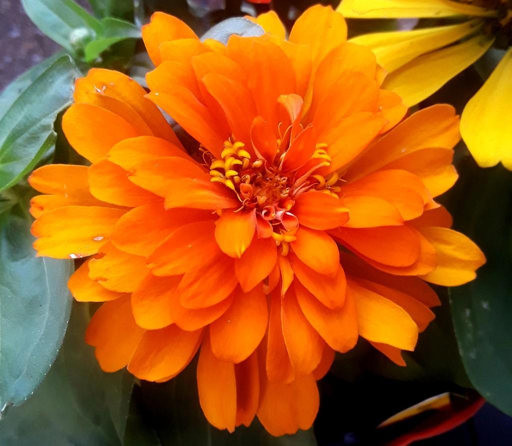 Flower  by linnypinny