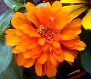 2nd Mar 2021 - Flower