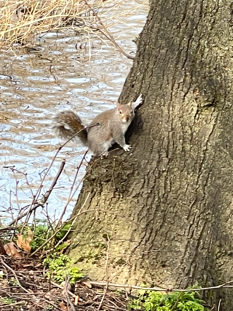 Squirrel by tinley23