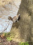 2nd Mar 2021 - Squirrel
