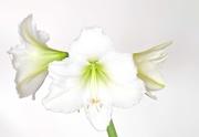 27th Feb 2021 - Three Bright Blooms