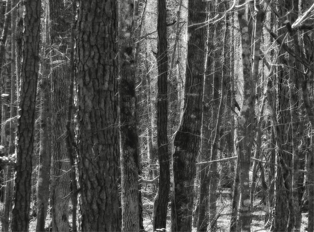 Tree textures... by marlboromaam
