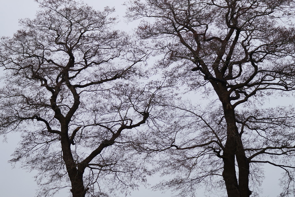 branches by gijsje
