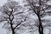 3rd Mar 2021 - branches
