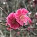 Spring trees flowering