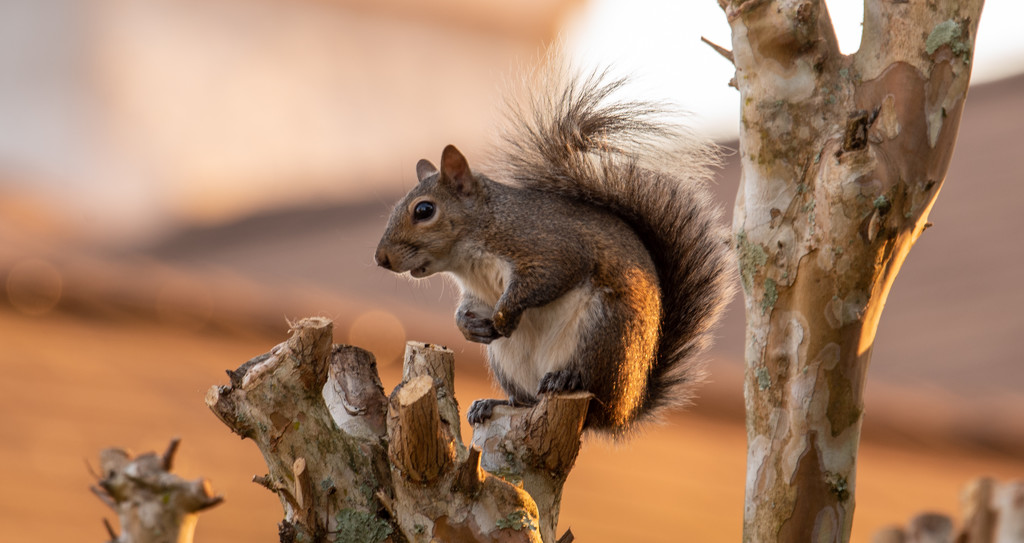 Squirrel, Trying to Decide Whether or Not to Stay! by rickster549