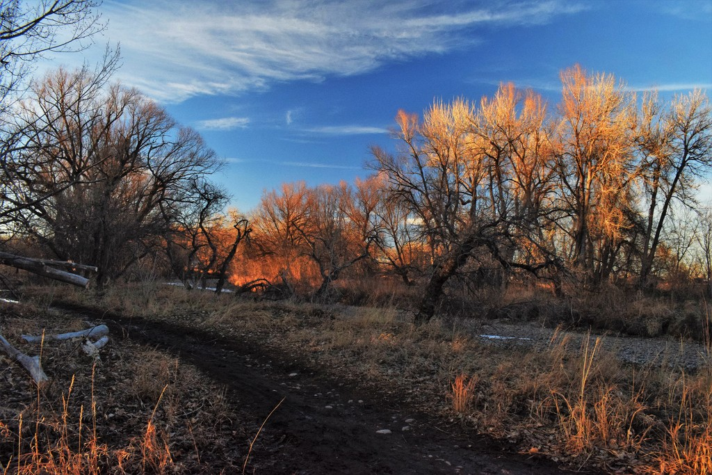 Almost sunset along Poudre River Trail by sandlily