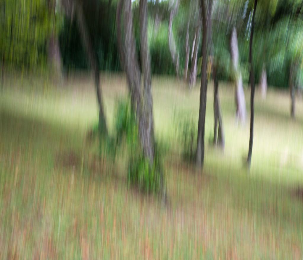 Paint my woods by yaorenliu