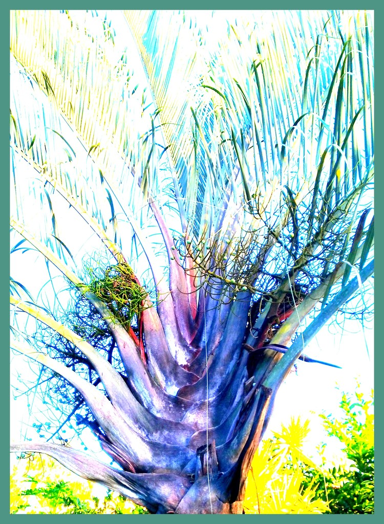 Processed palm tree by 777margo