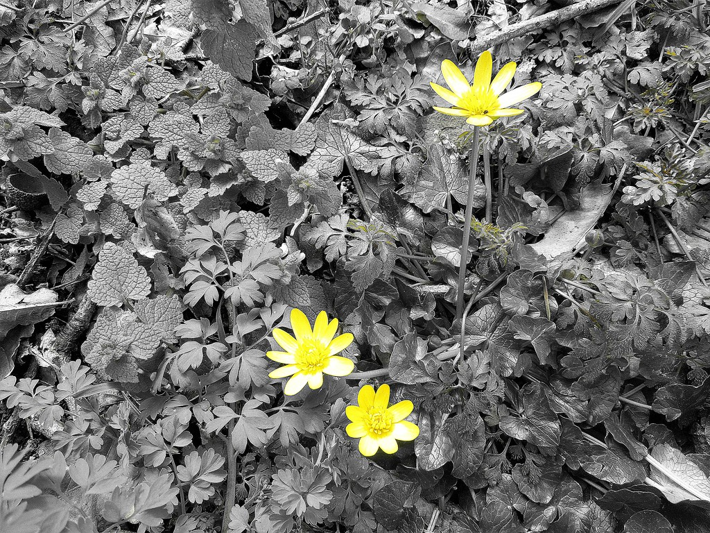 Springtime : a flash of yellow by etienne
