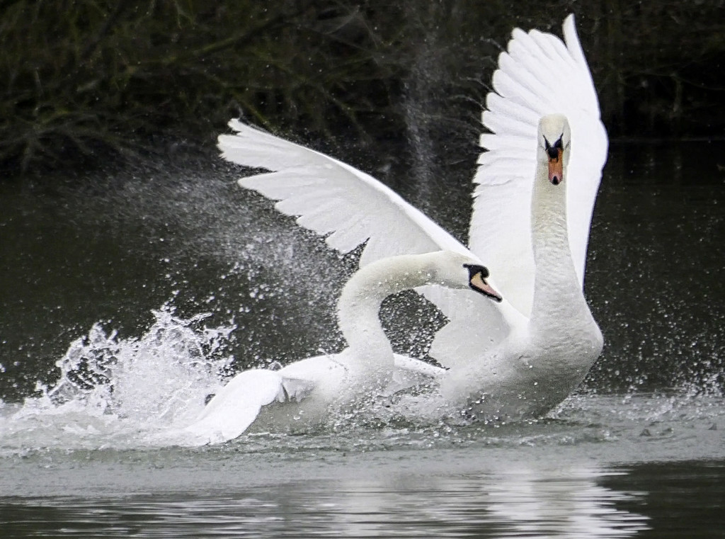 Making A Splash  by tonygig