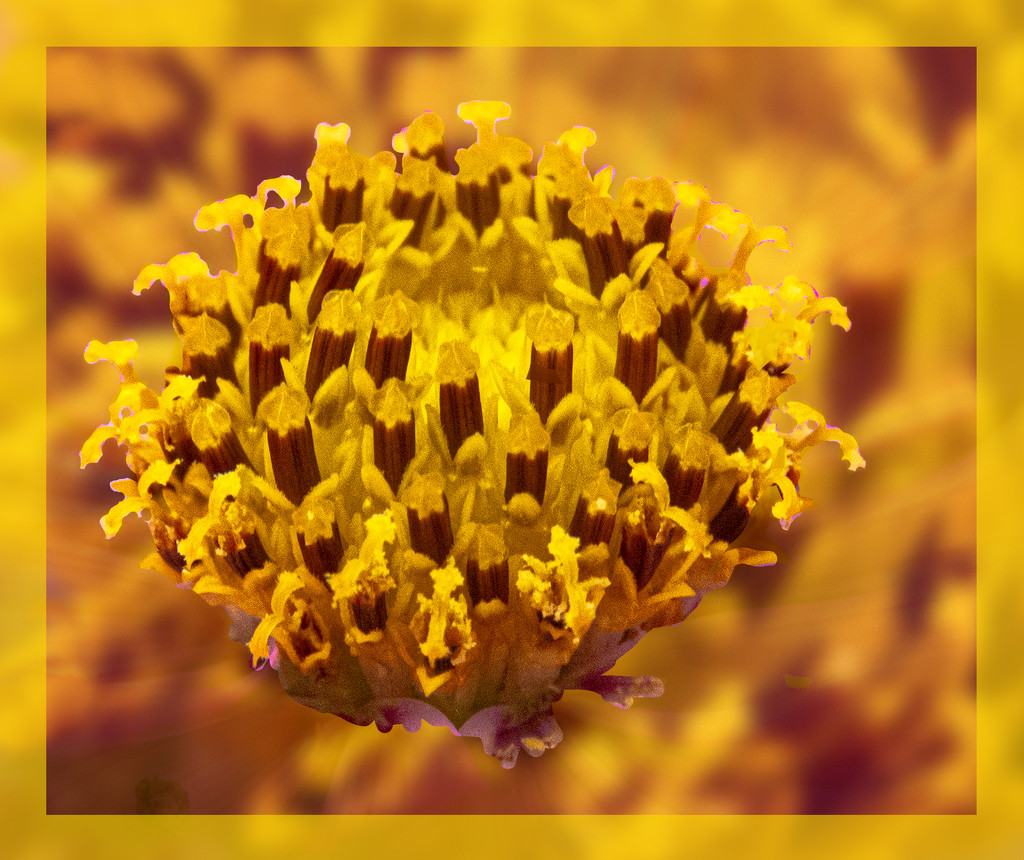 day yellow by koalagardens