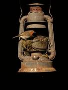 3rd Mar 2021 - Building a nest