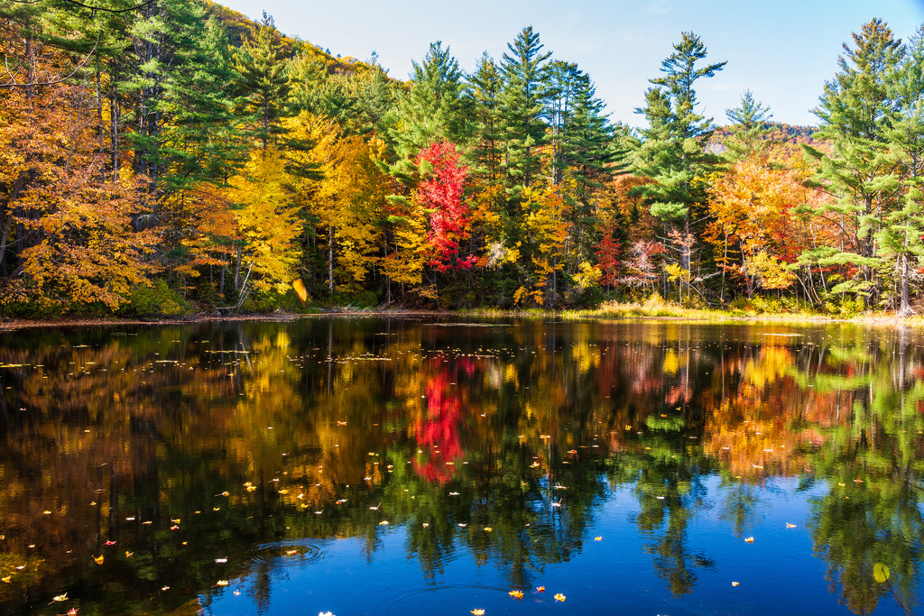 Reflections of Fall by photograndma