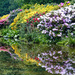 0303 - Leondslee Gardens