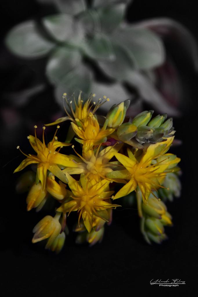 Succulents - Rainbow Month by yolanda