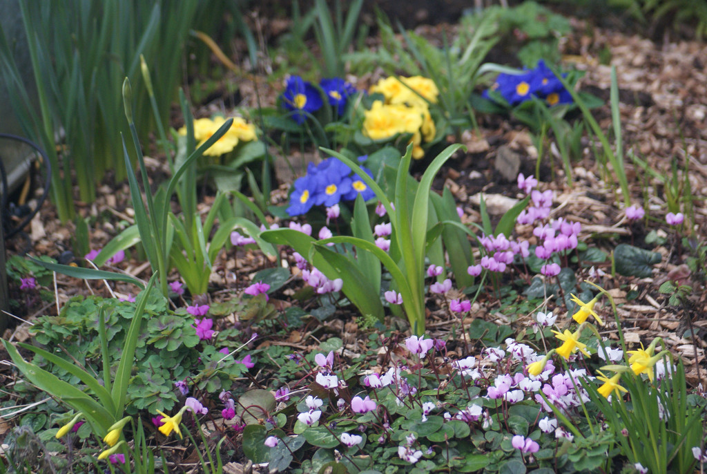 Spring flower bed by 365projectmaxine